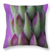 Close Up Lupin  Throw Pillow
