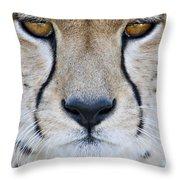 Close-up Of A Cheetah Acinonyx Jubatus Throw Pillow