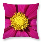 Close Up Of A Cosmos Flower Throw Pillow