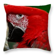 Close Up Of A Gorgeous  Green Winged Macaw Parrot. Throw Pillow