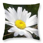Close Up Of A Margarite Daisy Flower Throw Pillow