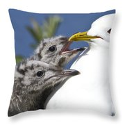 Close Up Of A Mew Gull With Two Hungry Throw Pillow