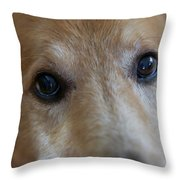 Close Up Of A Pet Dogs Eyes Throw Pillow