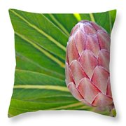 Close Up Of A Protea In Bud Throw Pillow