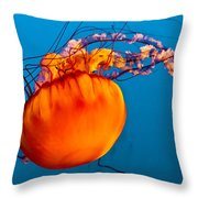 Close Up Of A Sea Nettle Jellyfis Throw Pillow
