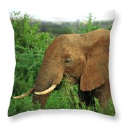 Close Up Of African Elephant Throw Pillow