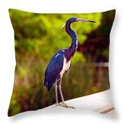 Close-up Of An Blue Egret, Boynton Throw Pillow