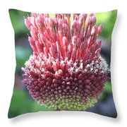 Close Up Of An Ornamental Onion Or Drumstick Allium  Throw Pillow