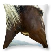 Close-up Of Brown Pinto Pony With White Throw Pillow