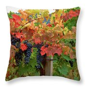 Close-up Of Cabernet Sauvignon Grapes Throw Pillow
