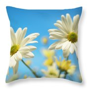 Close-up Of Daisies Against A Blue Throw Pillow