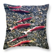 Close-up Of Fish In Water, Sockeye Throw Pillow
