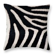 Close-up Of Greveys Zebra Stripes Throw Pillow