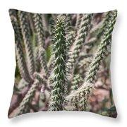 Close Up Of Long Cactus With Long Thorns  Throw Pillow