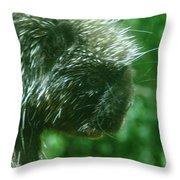 Close Up Of Mr Porcipine Throw Pillow