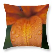 Close-up Of Orange Lily Flower After Throw Pillow