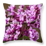 Close-up Of Redbud Tree Blossoms Throw Pillow