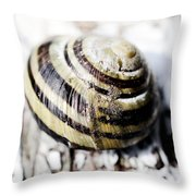 Close Up Of Sea Shell Throw Pillow by Tommytechno Sweden