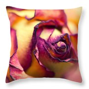 Close Up Of The Dry Rose Throw Pillow