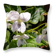 Close-up Of White Violets  Throw Pillow