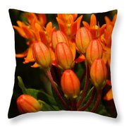 Close-up Of Wildflower Buds Throw Pillow