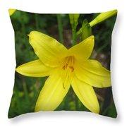 Close Up Of Yellow Mini Dayliliy Throw Pillow