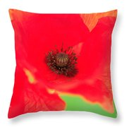 Close Up Poppies Throw Pillow