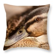 Close Up Shot Of Female Mallard Duck Throw Pillow