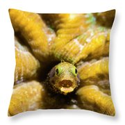 Close-up Spinyhead Blenny Throw Pillow