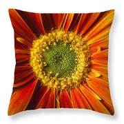 Close Up Yellow Orange Mum Throw Pillow