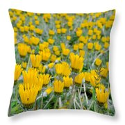 Closed Yellow Daisies Throw Pillow