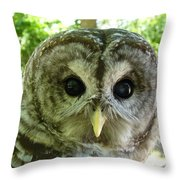 Closeup Of A Barred Owl Throw Pillow