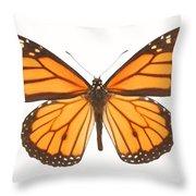 Closeup Of A Butterfly Throw Pillow