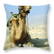 Closeup Of A Camel Throw Pillow