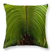 Closeup Of A Palm Tree Leaf Throw Pillow