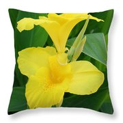 Closeup Of A Tropical Yellow Canna Lily Throw Pillow
