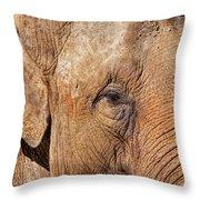 Closeup Of An Elephant Throw Pillow