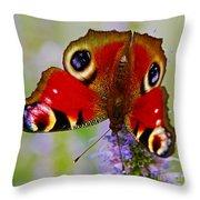 Closeup Of An European Peacock Butterfly  Throw Pillow