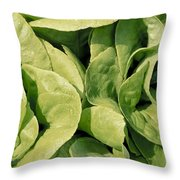 Closeup Of Boston Lettuce Throw Pillow