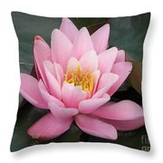 Closeup Of Pink Waterlily In A Pond Throw Pillow