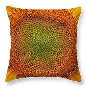 Closeup Of Sunflower Throw Pillow