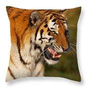 Closeup Portrait Of A Siberian Tiger  Throw Pillow