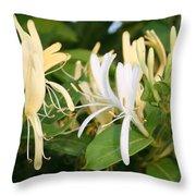Closeup Shot Of Lonicera European Honeysuckle Flower Throw Pillow