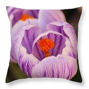 Closeup Striped Purple Crocus Vernus Throw Pillow