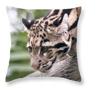 Clouded Leopard Cub Throw Pillow