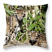 Clouded Leopards Throw Pillow