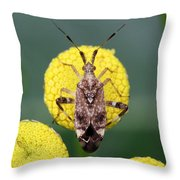 Clouded Plant Bug On Tansy Throw Pillow