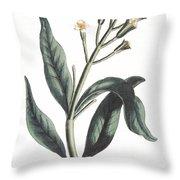 Clove Eugenia Aromatica Throw Pillow