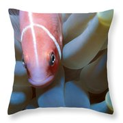 Clownfish 16 Throw Pillow