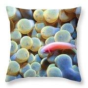 Clownfish 56 Throw Pillow